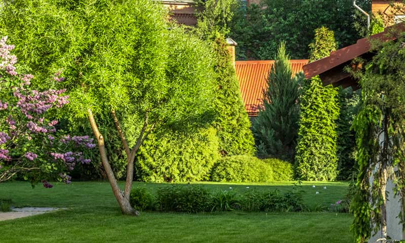 Best-Trees-for-Privacy