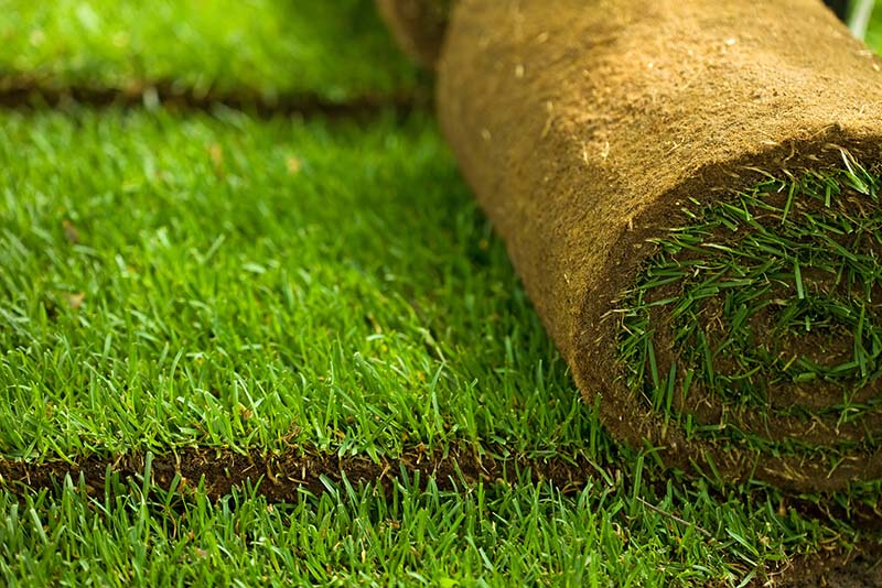 Sod installation - First step in Lawn renovation.