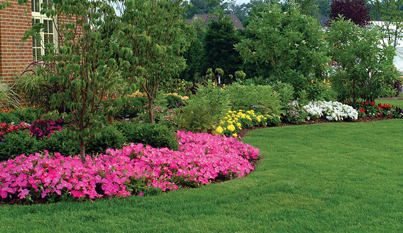 trees, shrubs, and flowers on border of property, plan-for-privacy