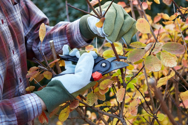 Fall Pruning Closeup