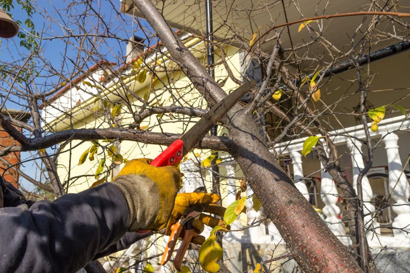 Pruning a Tree in the Fall
