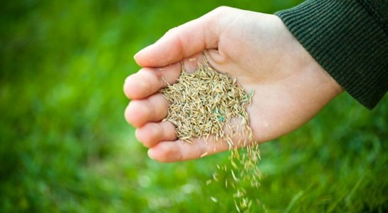 Hand Sprinkling Grass Seed